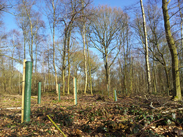 Preserving moisture of the woodland floor